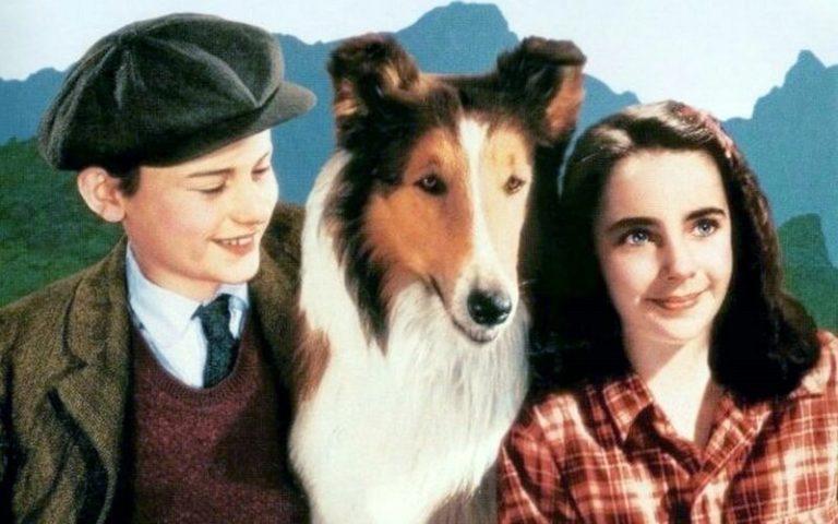 Lassie y sus secretos